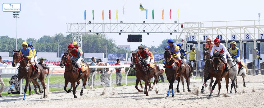 Trường đua ngựa- Nguồn: Khu du lịch Đại Nam